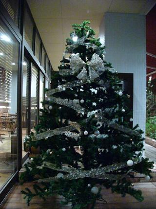 クリスマスツリー12月.JPG
